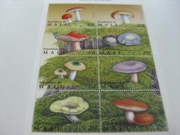 Mali-Mushrooms - Mushrooms