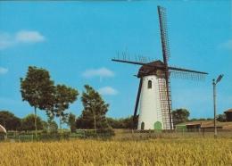 Windmolen Lissewege Bij Brugge    De Witte Molen         Nr 1885 - Moulins à Vent