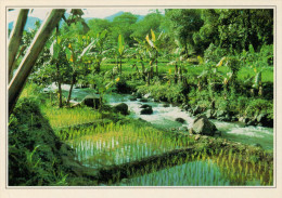 VIETNAM        RISAIE     (NUOVA CON DESCRIZIONE DEL SITO) - Vietnam