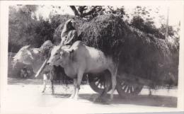 Pakistan Karachi Bullock Cart Real Photo - Pakistan