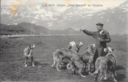CARTE POSTALE ANCIENNE  SUISSE - SIMPLON - CHIENS SAINT-BERNARD - Svizzera