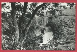Waimes - Cascade Du Vieux Moulin - 1968 ( Voir Verso ) - Waimes - Weismes