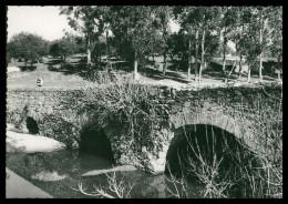 PORTALEGRE -CRATO - ROMANO - Ponte Romana Do Chocanal( Ed. António Aparicio Raposo) Carte Postale - Portalegre
