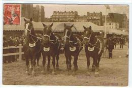 CONCOURS AGRICOLE PARIS 1913   PRESENTATION CHEVAUX N° 681-682-683-685 - Expositions