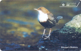 ANDORRA PHONECARD(STA) DIPPER  A:0103-20000pcs -4/99-USED - Uccelli Canterini Ed Arboricoli