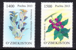 UZB2-23UZBEKISTAN- 2013 PLANTS - Uzbekistan