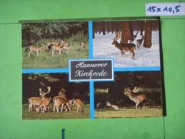 155 )  Hannover  :damwild Im Tiergarten  : Multivues :  Recto- Verso : - Hannover