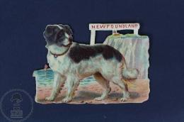 OldNewfoundland Dog  Die Cut Trading Card/ Chromos Topic/ Theme - Animales