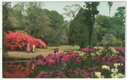 Magnolia Gardens, Charleston, S.C. - Thomas E-13281 - Charleston