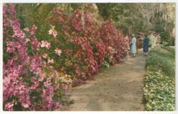 Magnolia Gardens, Charleston, S.C. - Thomas E-13283 - Charleston