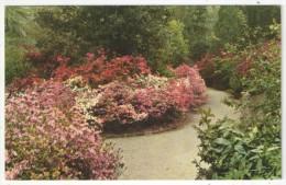 Magnolia Gardens, Charleston, S.C. - Thomas E-13282 - Charleston