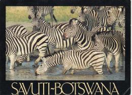 BOTSWANA - Savuti 2002 - Botswana