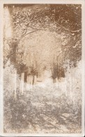 1900 CIRCA ROYAL OAK AVENUE - MINSTER - Unclassified