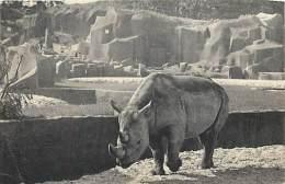 Réf : G-15-1027 : RHINOCEROS A VINCENNES - Rhinocéros