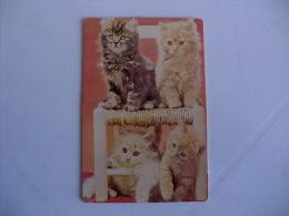 Cat Chat Gato Malhado, Marmelada E Creme De Pêlo Longo Portuguese Pocket Calendar 1988 - Calendriers