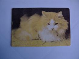Cat Chat Gato Bicolor Pêlo Comprido Portuguese Pocket Calendar 1988 - Calendriers