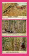 6 Chromos LIEBIG - Insectes Géants Du Congo Belge - Mante, Cigale, Petrognathe, Goliath Géants - Criquet - OXO - Liebig