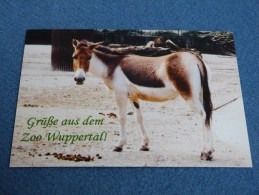 ZOO WUPPERTAL . ALLEMAGNE. KIANG. - Wuppertal