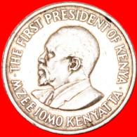 ★WITH LEGEND★ KENYA★50 CENTS 1971! LOW START★NO RESERVE! - Kenya