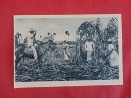 > Cuba  -- Habana----- Cutting Sugar Cane  -ref 1771 - Cuba