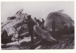Postcard Whales On The Docks C1915 North Sea Harbour - Repro - Fishing