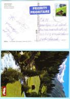ÖSTERREICH AUSTRIA AUTRICHE - AK Postcard 2515 Ferienland - Gletscherbach   (026934) - 1945-.... 2nd Republic