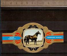 BAGUE DE CIGARE Grand Format 11,5 X 6 /LUGANO PAARDEN IV N° 76 / CHEVAL AMERIKAANSE VOLBLOED - Bagues De Cigares