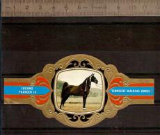 BAGUE DE CIGARE Grand Format 11,5 X 6 /LUGANO PAARDEN IV  N° 79  / CHEVAL TENESSEE WALKING HORSE - Bagues De Cigares