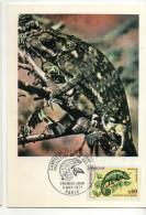 CARTE MAXIMUM 1ER JOUR CAMELEON - Reptiles & Batraciens