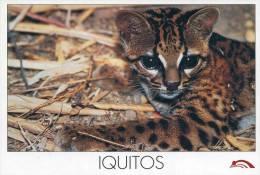 Lote PEP836, Peru, Postal, Postcard, Iquitos, Fauna, Tigrillo, Lynx - Perú