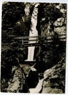 Tatzelwurm - Wasserfall, 1959. Normalformat - Other