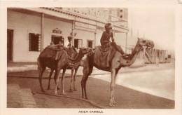 ¤¤  -   YEMEN   -   ADEN  -  Carte-Photo   -  Camels   -  Chameaux       -  ¤¤ - Yémen