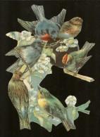 GRAND DECOUPIS Groupe D'Oiseaux 14 X 20 Cm - Tiere