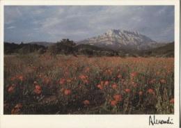 CPM - Photo ALESSANDRI - Provence - Ste Victoire : Hommage à Cézanne - Edition A.J.E.A. / N°87-136 - Illustrateurs & Photographes