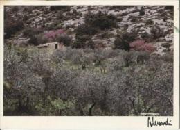 CPM - Photo ALESSANDRI - Provence - Argent Des Oliviers … - Edition A.J.E.A. / N°88-156 - Ilustradores & Fotógrafos