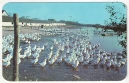 Long Island Duck Farm, Long Island, N.Y. - Long Island