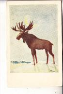 JAGD - HUNTING - JACHT - CHASSE - CACCIA - CAZA - LOWIECTWO - Künstler-Karte Elch / Moose / Elan / Eland / Elg - Ansichtskarten