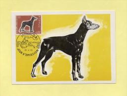 Monaco - Exposition Canine - Dobermann -  N°816 - Maximumkaarten