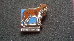 Pin P. St. Bernard -P60 - Pin's