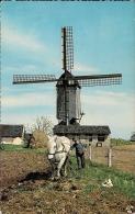 NEDERLAND  Cavallo Al Lavoro  Molen Windmill Moulin A Vent  Fg - Cavalli