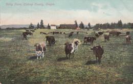 DAIRY FARM - CLATSOP COUNTY / OREGON - Etats-Unis