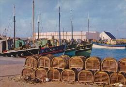 LESCONIL - Le Port - Vue Sur La Criée - Lesconil