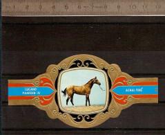 BAGUE DE CIGARE Grand Format 11,5 X 6 /LUGANO PAARDEN IV  N° 89  / CHEVAL : ACHAL-TEKE - Bagues De Cigares