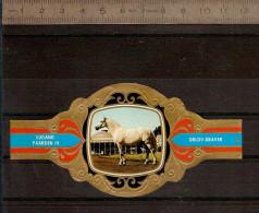 BAGUE DE CIGARE Grand Format 11,5 X 6 /LUGANO PAARDEN IV  N° 92 / CHEVAL : ORLOV-DRAVER - Cigar Bands