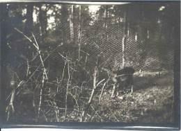 Photo - Guerre 1914-18 - 20e Escadron Du Train - Biche Prise Par Les Poilus Dans La Forêt De Parroy - Septembre 1916 - Guerre, Militaire