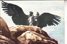 MONGOLIA / MONGOLEI - Künstler-Karte, Der Große Adler Der Mongolen - Mongolei