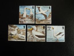 Ascension Island 2004 - Bird Life International - Birds : Masked Booby - Ascension (Ile De L')