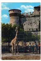 BRESCIA Castello E Zoo (Giraffa) - Non Classés