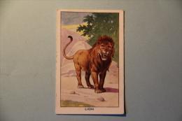 LION - Animaux