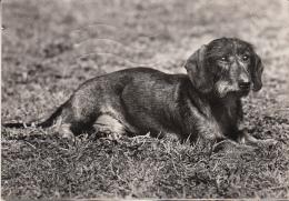 Hunde Ak87872 - Chiens